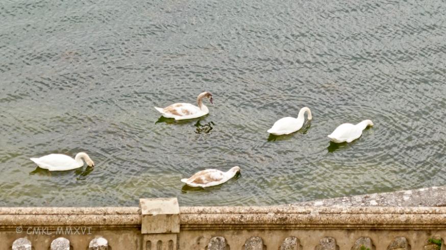 swan-breakfast-1080835