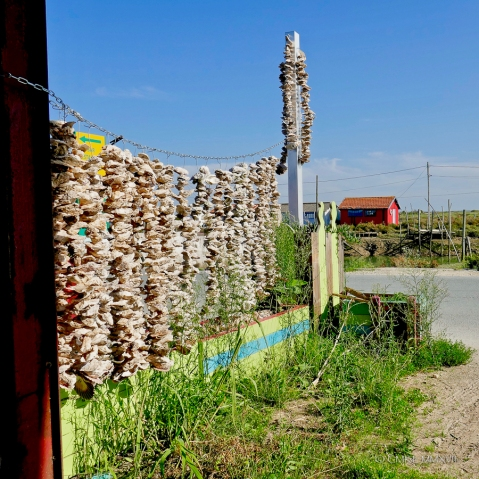 A wind-chime curtain made of oyster shells.
