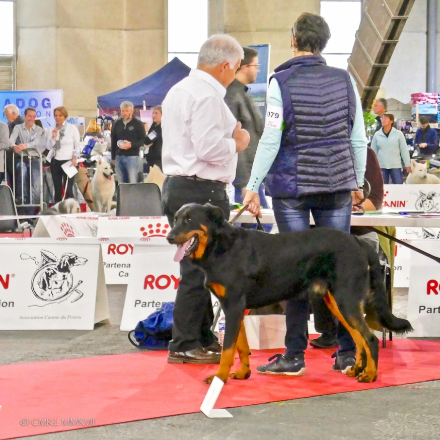 Poitiers.DogShow.02-1270210