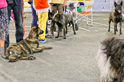 Poitiers.DogShow.03-1270232