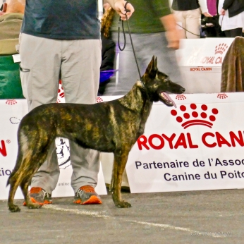 Poitiers.DogShow.04-1270235