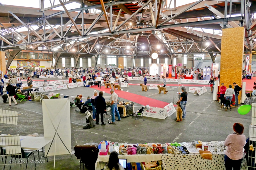 Poitiers.DogShow.08-1270275