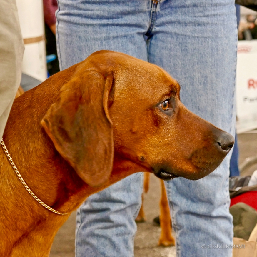 Poitiers.DogShow.11-1270316