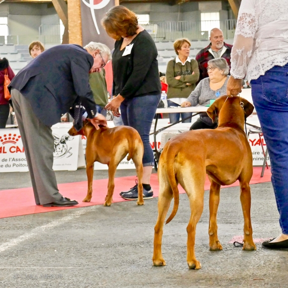 Poitiers.DogShow.13-1270341