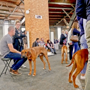 Poitiers.DogShow.14-1270364