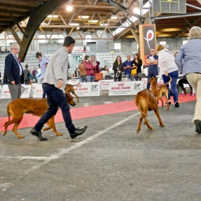 Poitiers.DogShow.15-1270403