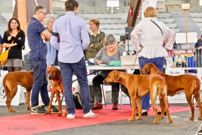 Poitiers.DogShow.16-1270416