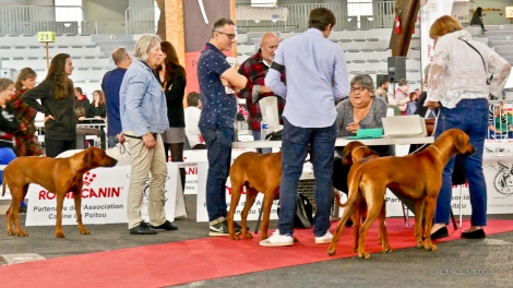 Poitiers.DogShow.21-1270408