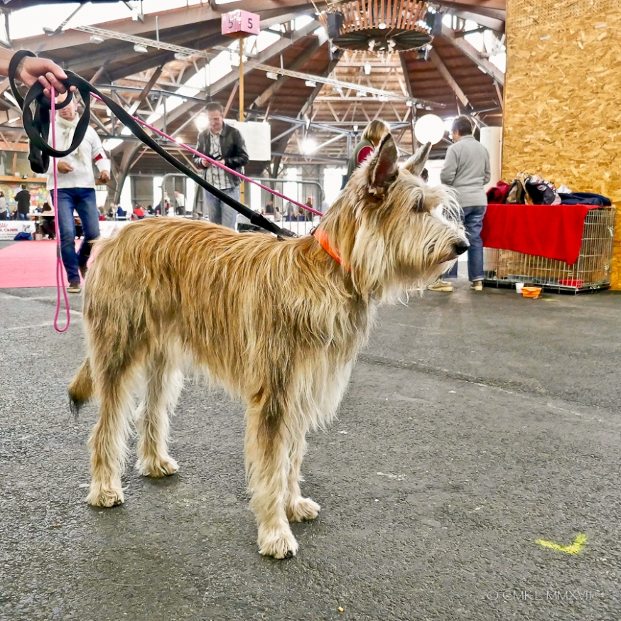 Poitiers.DogShow.20-1270296