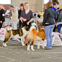 Poitiers.DogShow.24-1270494