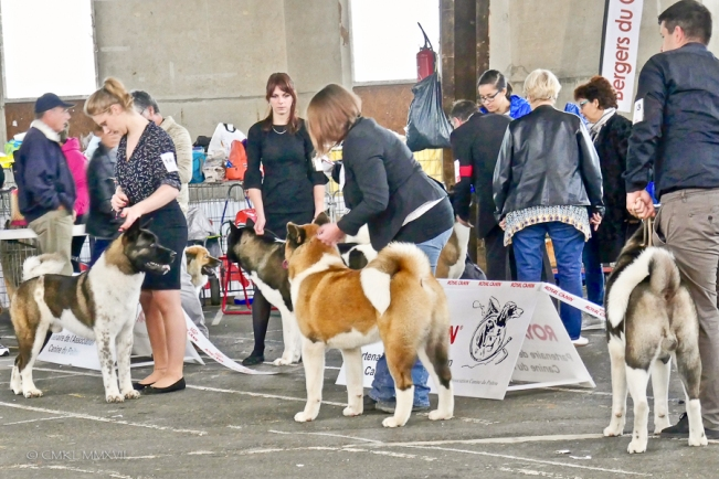Poitiers.DogShow.25-1270495