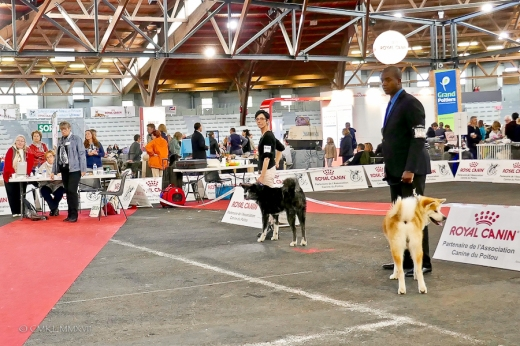 Poitiers.DogShow.26-1270709