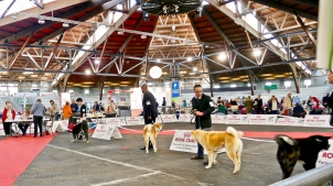 Poitiers.DogShow.27-1270711