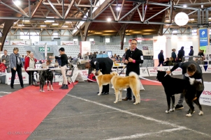 Poitiers.DogShow.28-1270716