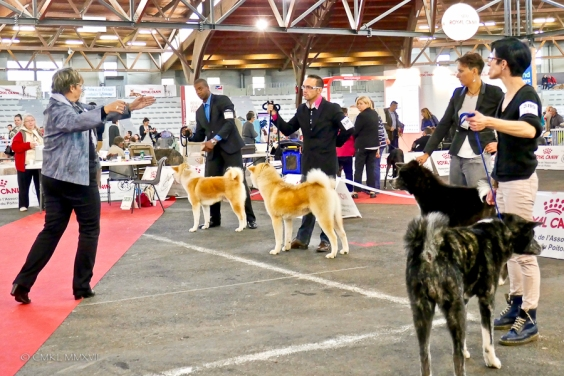 Poitiers.DogShow.29-1270724