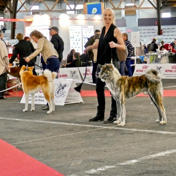 Poitiers.DogShow.31-1270853