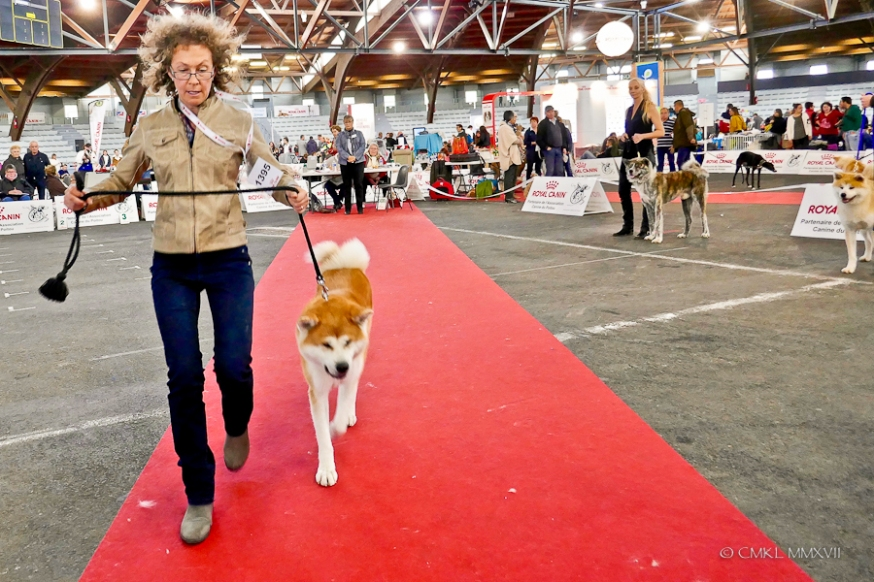 Poitiers.DogShow.32-1270866
