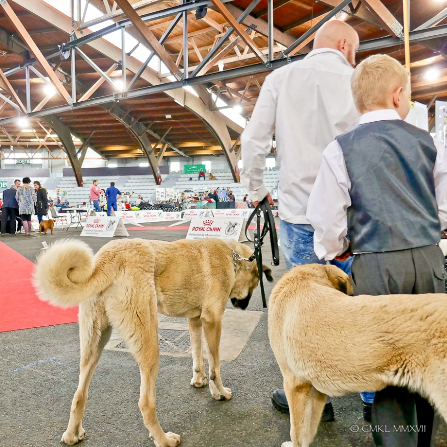 Poitiers.DogShow.33-1270510