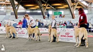 Poitiers.DogShow.36-1270532