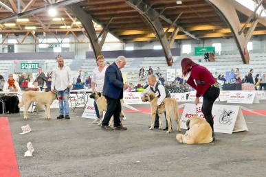 Poitiers.DogShow.37-1270548