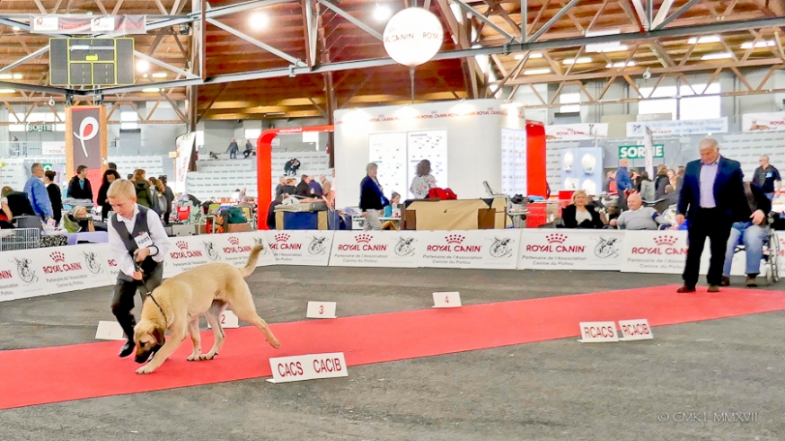 Poitiers.DogShow.37-1270584