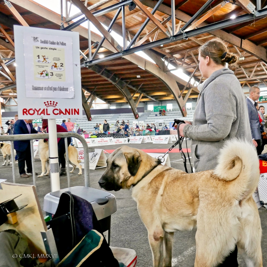 Poitiers.DogShow.38-1270549