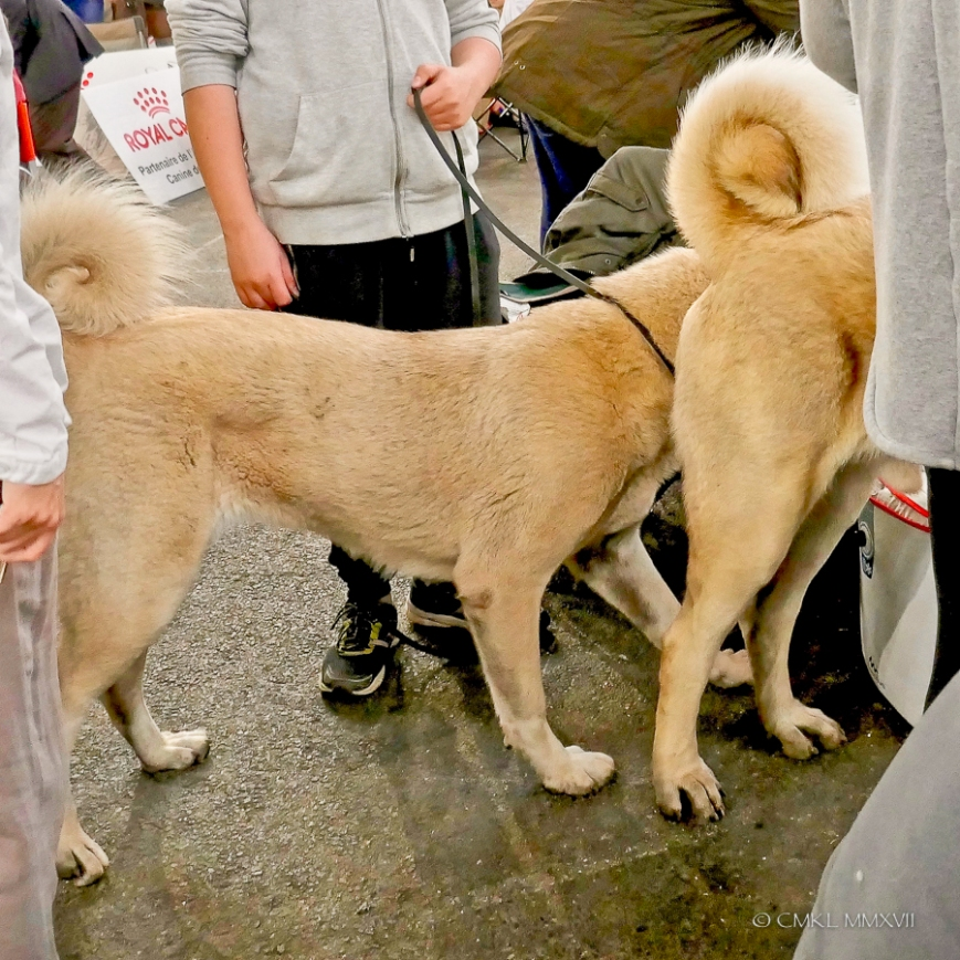 Poitiers.DogShow.40-1270565