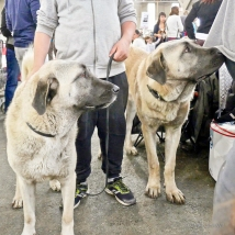 Poitiers.DogShow.41-1270615