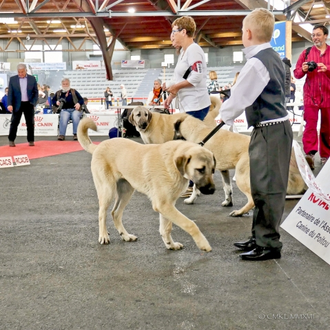 Poitiers.DogShow.43-1270600