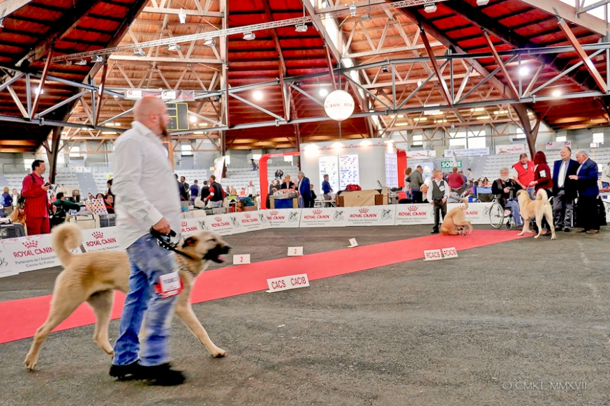 Poitiers.DogShow.44-1270666