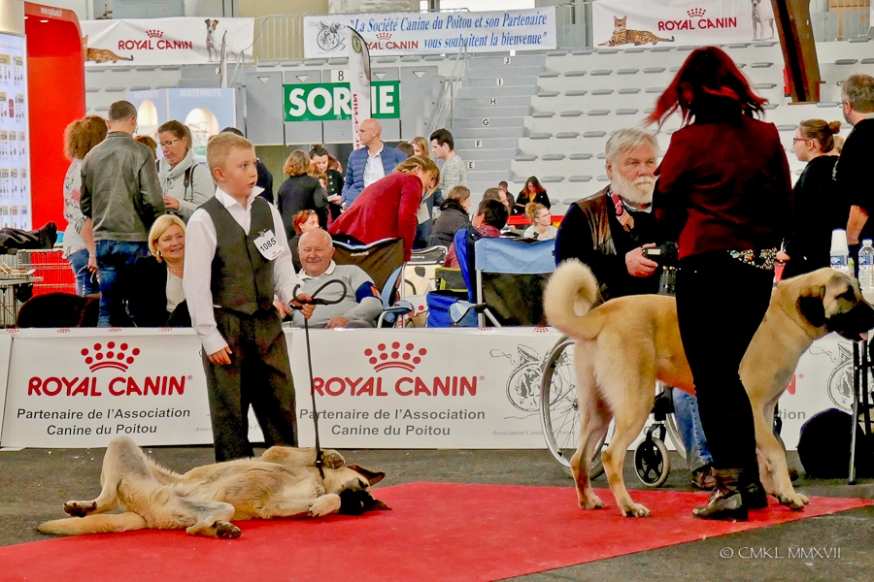 Poitiers.DogShow.45-1270675