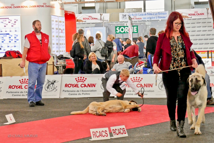 Poitiers.DogShow.46-1270676