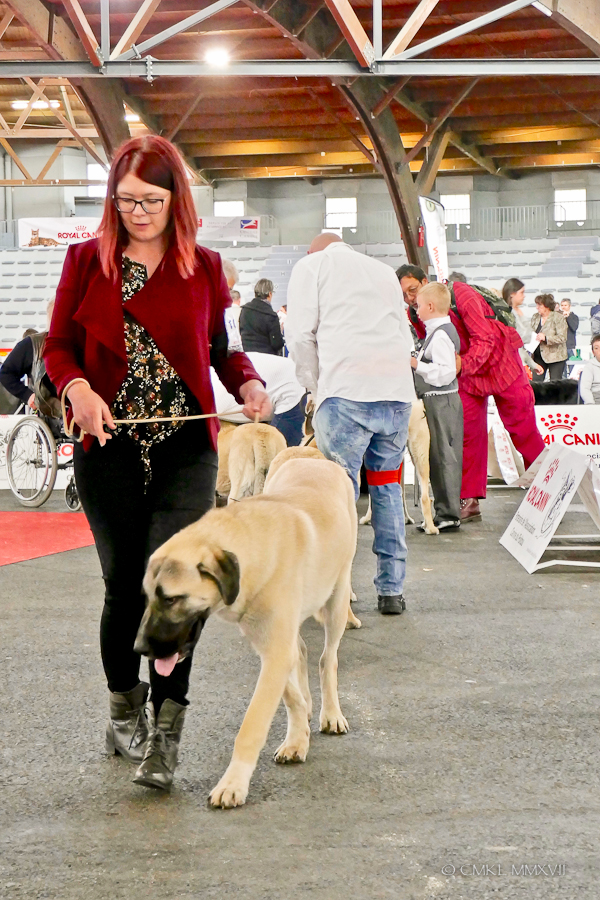 Poitiers.DogShow.47-1270682