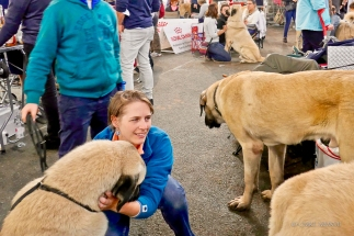 Poitiers.DogShow.50-1270690