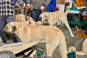 Poitiers.DogShow.53-1270765