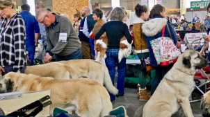 Poitiers.DogShow.54-1270773
