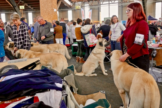 Poitiers.DogShow.55-1270774
