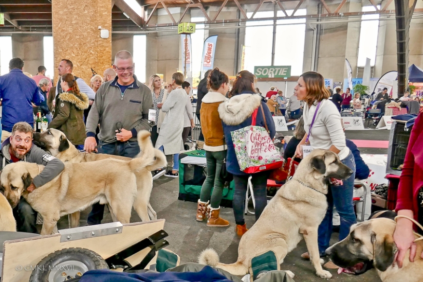 Poitiers.DogShow.56-1270780