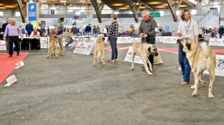 Poitiers.DogShow.59-1270816