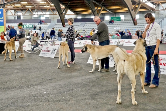 Poitiers.DogShow.60-1270817