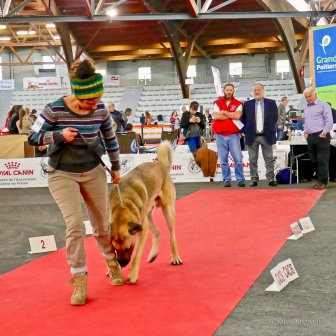 Poitiers.DogShow.61-1270827