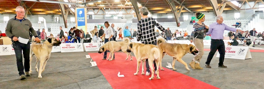 Poitiers.DogShow.62-1270876