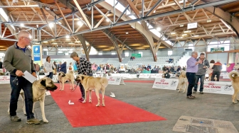 Poitiers.DogShow.63-1270877