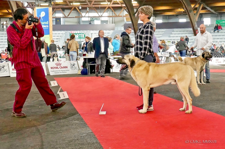 Poitiers.DogShow.64-1270878