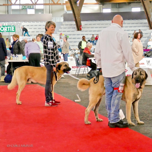 Poitiers.DogShow.65-1270889