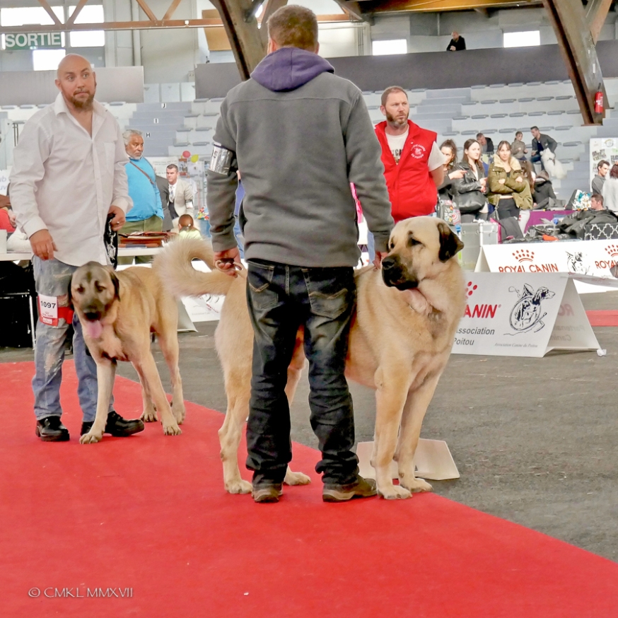 Poitiers.DogShow.67-1270896
