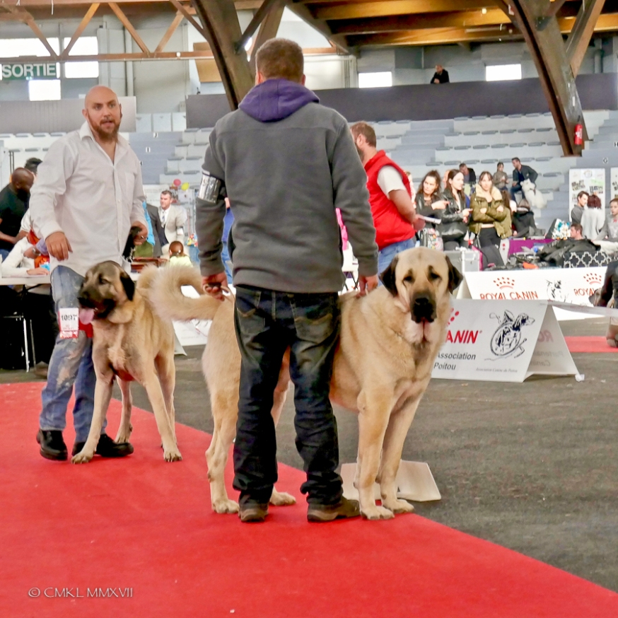 Poitiers.DogShow.68-1270897