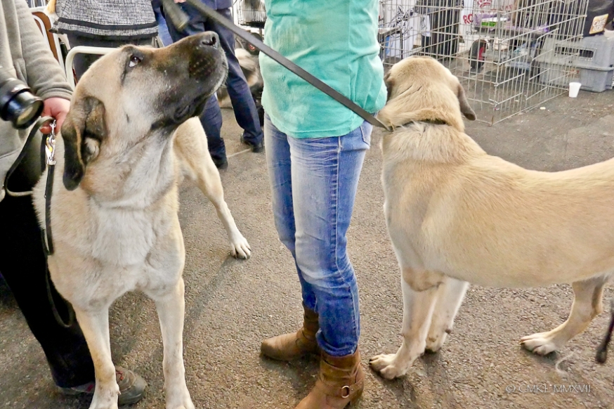 Poitiers.DogShow.69-1270898