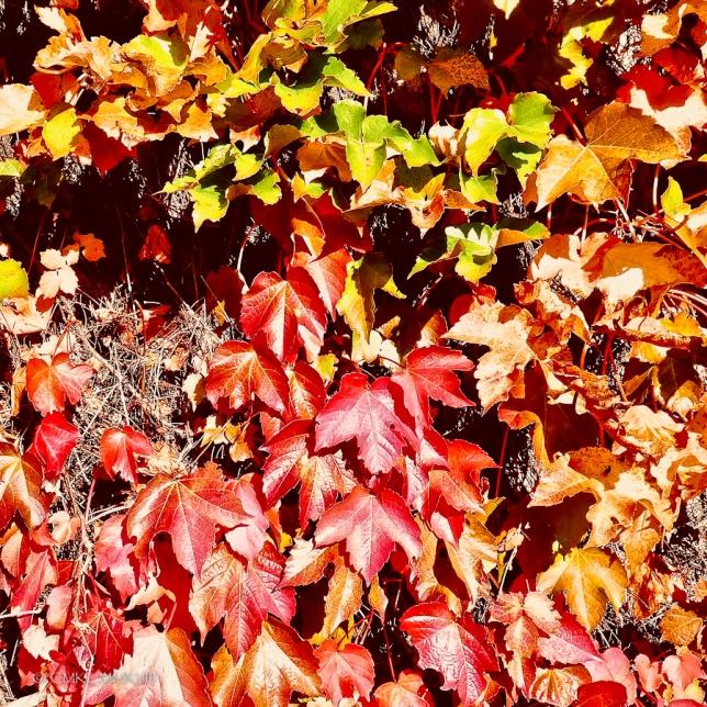 Autumn.C2L.Cognac.03-1330686