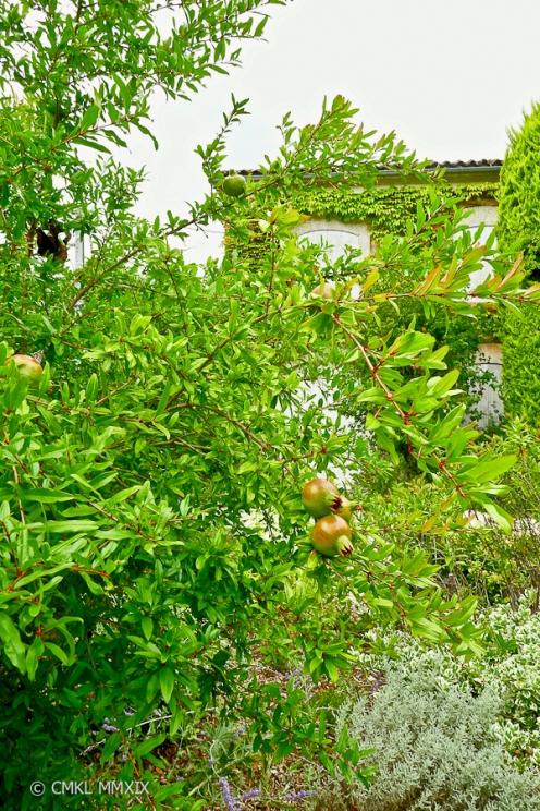 Jardin.August.05-1370039